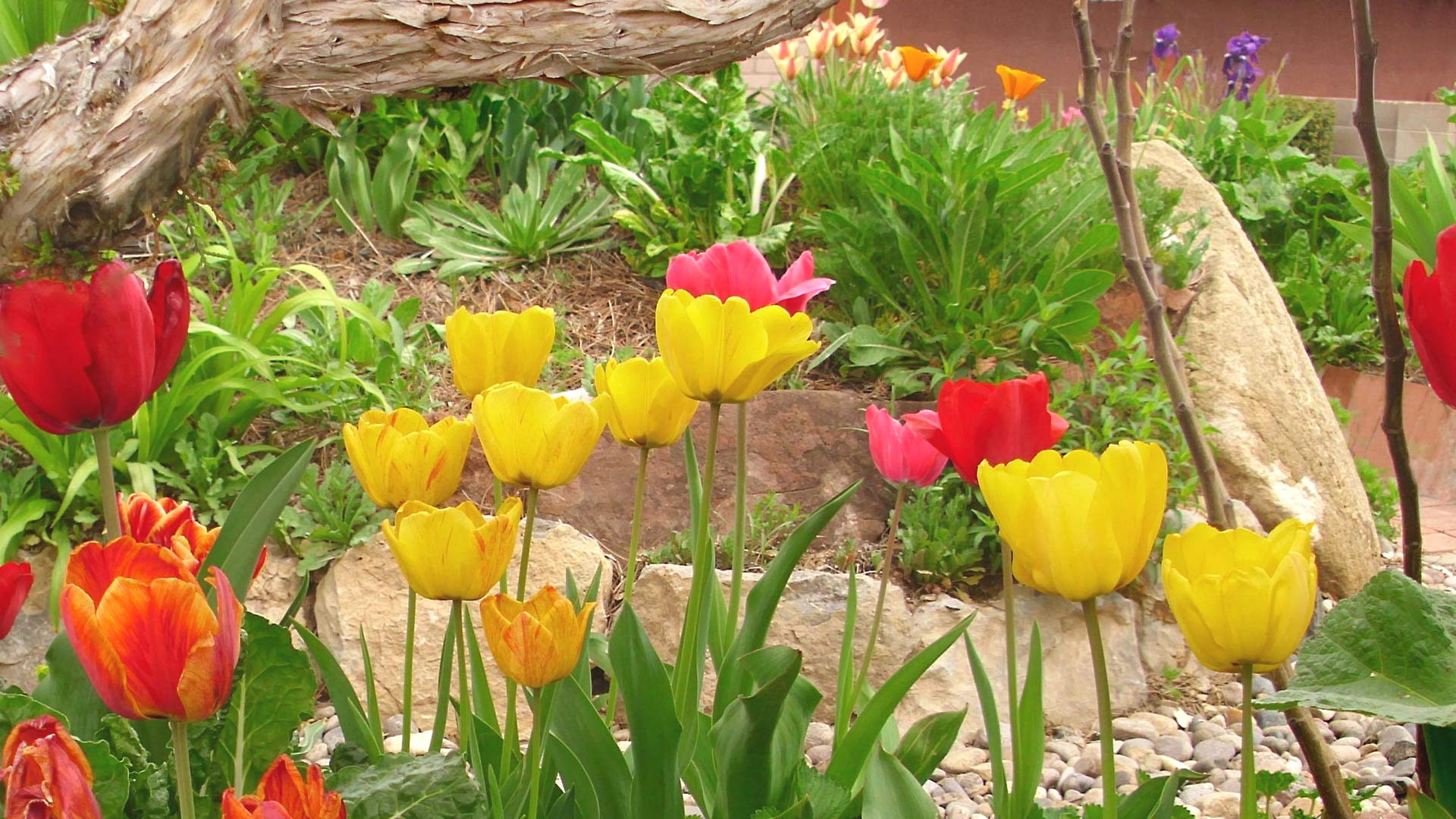 spring flowers screensavers - photo #13